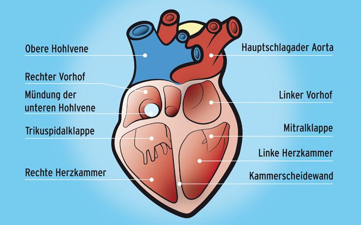 Klinikum Kulmbach – Interventionelle Kardiologie